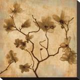 Magnolias I Stretched Canvas Print by Caroline Kelly