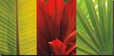 Tropical Treasure II Stretched Canvas Print by John Seba