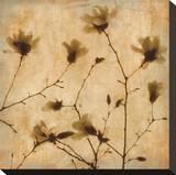 Magnolias II Stretched Canvas Print by Caroline Kelly