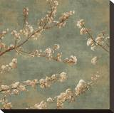 Morning Blossom II Stretched Canvas Print by John Seba