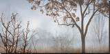 Early Morning Mist II Stretched Canvas Print by John Seba