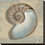 Aqua Nautilus Stretched Canvas Print by Caroline Kelly