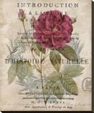 Botanique I Stretched Canvas Print by Deborah Devellier