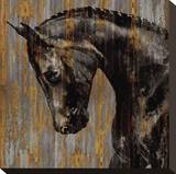 Horse I Stretched Canvas Print by Martin Rose