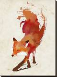 Vulpes Vulpes Stretched Canvas Print by Robert Farkas