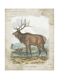 Woodland Stag II Prints by Hugo Wild