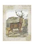 Woodland Stag I Premium Giclee Print by Hugo Wild