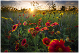 Breezy Dawn Over Texas Wildflowers Posters by Dean Fikar