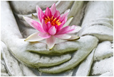 Buddha Hands Holding Flower Print by  anitasstudio