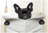 Dog Toilet Poster af Javier Brosch