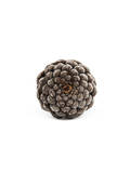 Pinecone 1 Photographic Print by Romina Bacci
