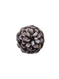 Pinecone 3 Photographic Print by Romina Bacci