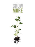 Grow More Photographic Print by Romina Bacci