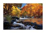River of Gold Giclee Print by Mike Jones