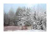 Frosty Morning Giclee Print by Mike Jones