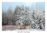 Frosty Morning Prints by Mike Jones