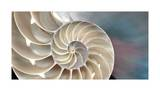 Nautilus Giclee Print by Andrew Levine