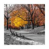 Park Pretty I Prints by Assaf Frank