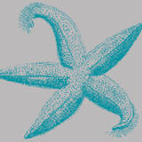 Sea Stars I Print by Sabine Berg