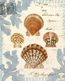 Seashell Collection I Prints by Sabine Berg
