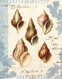 Seashell Collection II Poster by Sabine Berg