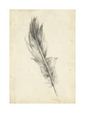 Feather Sketch IV Prints by Ethan Harper