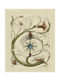 Decorative Flourish III Prints by  Vision Studio