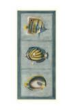 Tropical Fish Trio I Prints by  Vision Studio