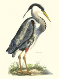 Great Blue Heron Poster by John Selby