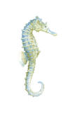 Watercolor Seahorse I Print by Megan Meagher