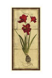Amaryllis Panel II Prints by  Vision Studio