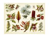 Tropical Botany Chart I Art par  Meyers