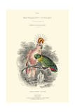 The Naturalist's Library II Prints by W.h. Lizars