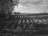 Furrows Photographic Print by Martin Henson