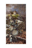 Quail Trail Posters by Carolyn Mock