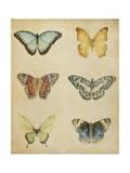 Butterfly Varietal I Posters af Megan Meagher