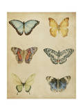 Butterfly Varietal I Posters by Megan Meagher