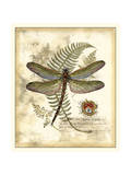 Regal Dragonfly I Prints by  Vision Studio