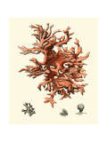 Red Coral III Art by  Vision Studio