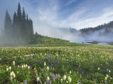 Mt. Rainier Wildflowers Photographic Print by Yiming Hu