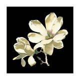 Mitternächtliche Magnolien I Kunstdruck von Chabal Dussurgey