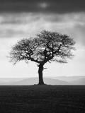Without Leaves Fotografisk tryk af Martin Henson