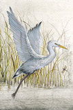 Heron Sanctuary I Prints by Tim O'toole