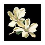 Mitternächtliche Magnolien II Kunstdrucke von Chabal Dussurgey