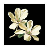 Midnight Magnolias II Prints by Chabal Dussurgey