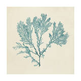 Chromatic Seaweed VIII Prints by  Vision Studio