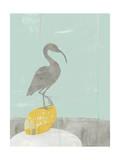 Heron Collage II Prints by Jennifer Goldberger