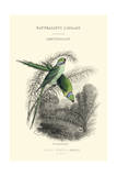 The Naturalist's Library I Poster by W.h. Lizars