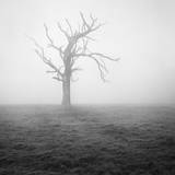 Misty Weather II Photographic Print by Martin Henson