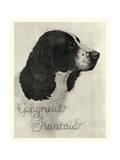 E'pagneul Francais Kunstdrucke von  Vision Studio